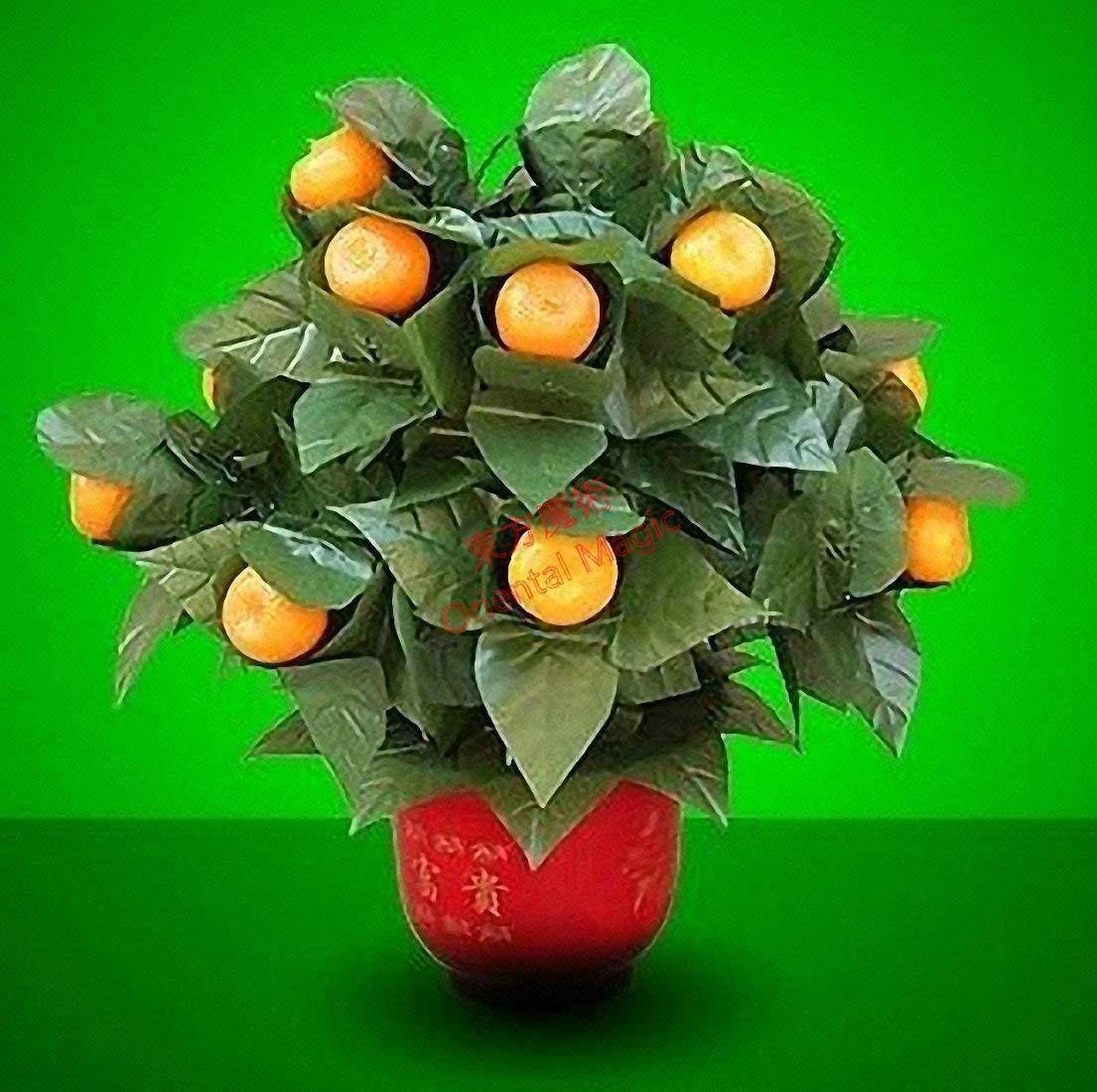 堅実な究極の 15ブルーミングオレンジ -/ リモートコントロール/ ステージマジック 15 奇術; Blooming Oranges - Remote Control -- ステージマジック/ Stage Magic/マジックトリック/魔法; 奇術; 魔力 B07QJ5FYYJ, リサイクルショップメイクバリュー:2fa21e69 --- arianechie.dominiotemporario.com