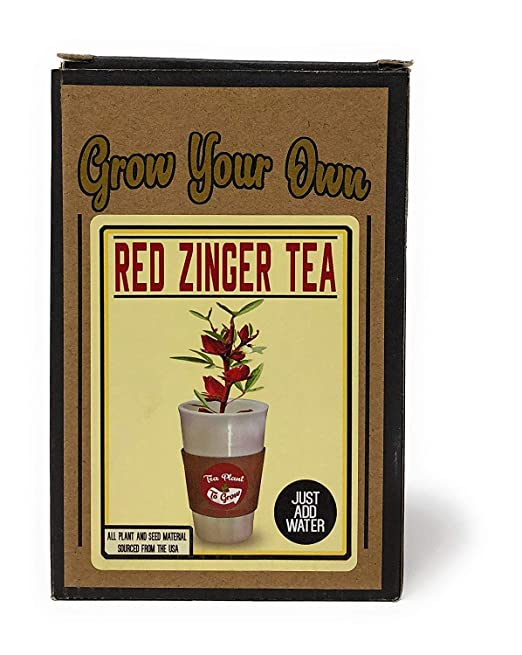 Amazon com : Grow Your Own Coffee or Tea Plant (Hot Chocolate