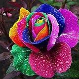100Pcs Colorful Rainbow Rose Seeds Fragrant Blooms Rose Seeds Rare Flowers Garden Plants Indoor Petal Plants Exotic Flower Garden Yard Decor (Multi)