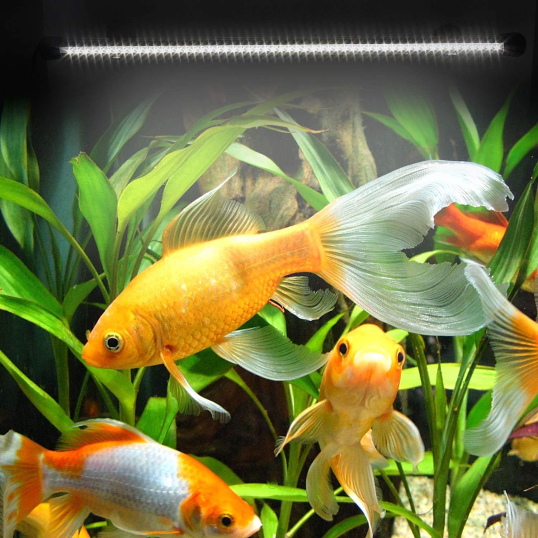 YAOBLUESEA Acuario LED Iluminación Bombilla resistente al agua para pez Tank 55LEDS 50 cm blanco: Amazon.es: Juguetes y juegos
