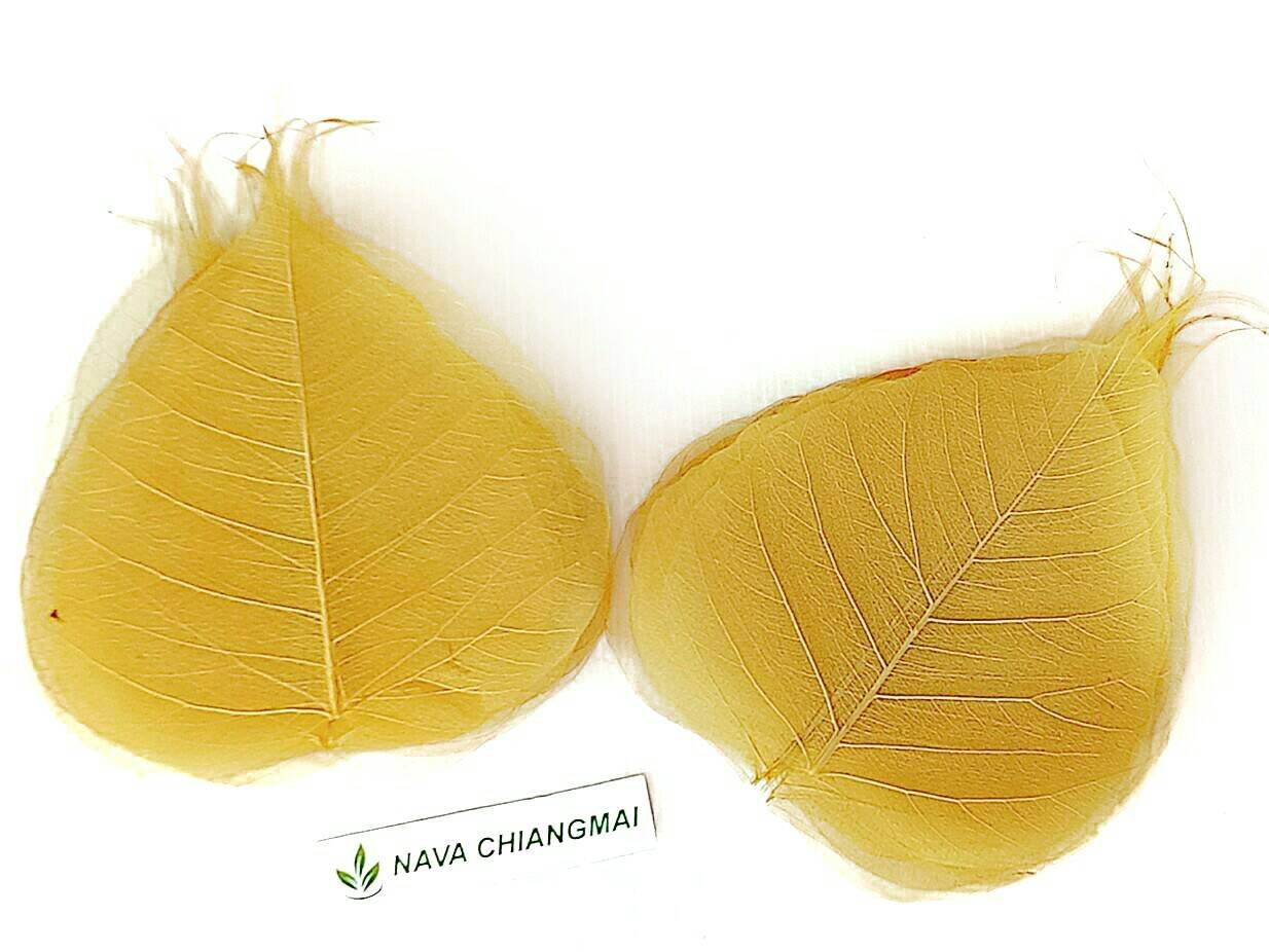NAVA CHIANGMAI Skeleton Natural Ficus Religiosa Leaves Artificial Leaves Craft Card Scrapbooking DIY Embellishment Decoration Art Greeting Cards Wedding Gifts Seasonal Gift Natural Color