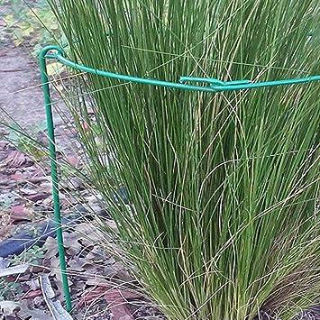Liteness 2 Pcs 25x40cm Soporte para Plantas De Flor De Vid De ...