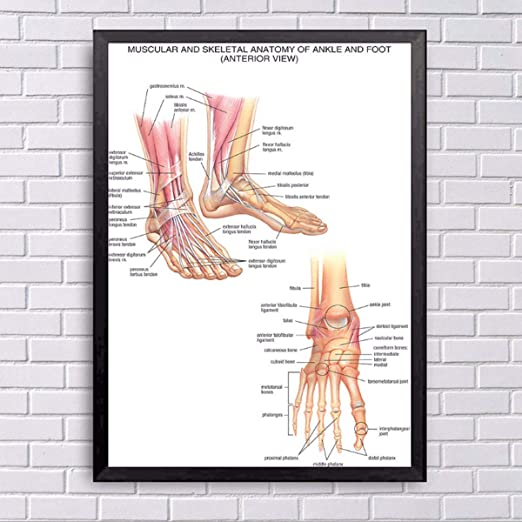 Fashion Anatomy Of The Brain Poster Anatomical Silk Cloth Chart Human Body