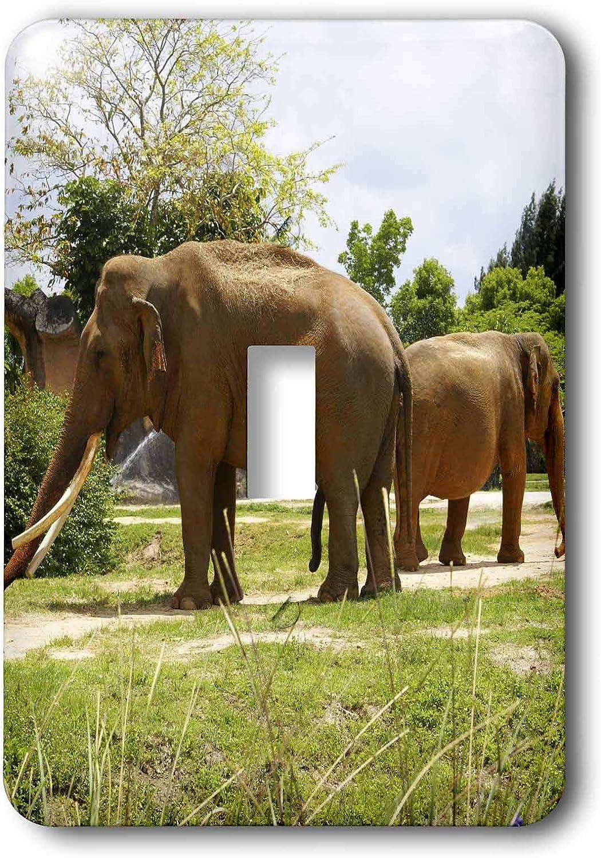 3drose Lsp 7827 1 Elephant Dance Single Toggle Switch Multicolor Switch Plates Amazon Com