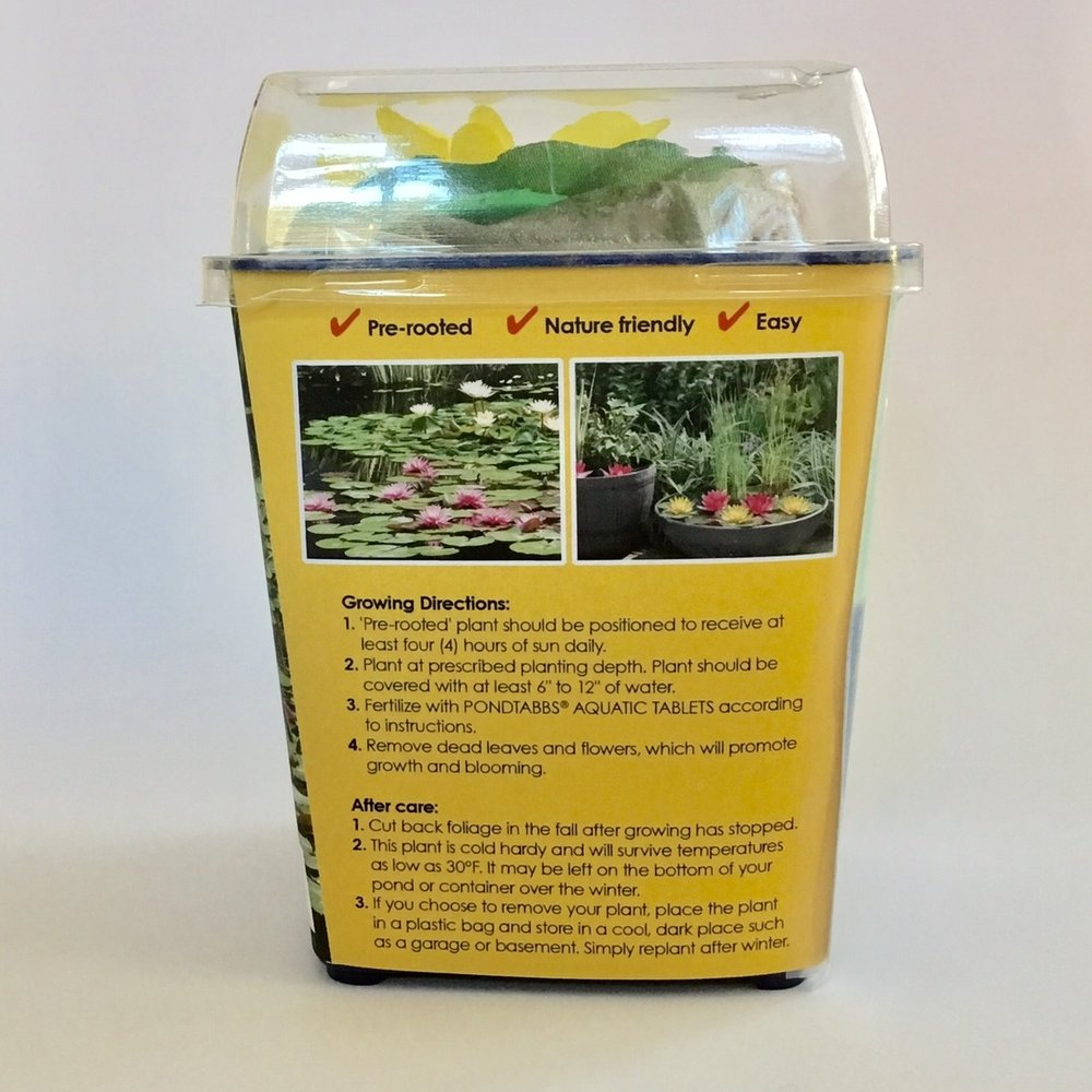 Plantabbs Pre Rooted White Walter Pagels Hardy Water Lily Ready Plant Drop -N-Grow