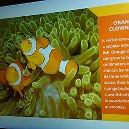 Orange Animals On The Planet Professor Baby Amazon Com Books