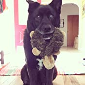 Pet Supplies : Pet Squeak Toys : ZippyPaws - Loopy