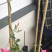 Gardman Bambus Rankhilfe 120Cm,3 Stk 07392