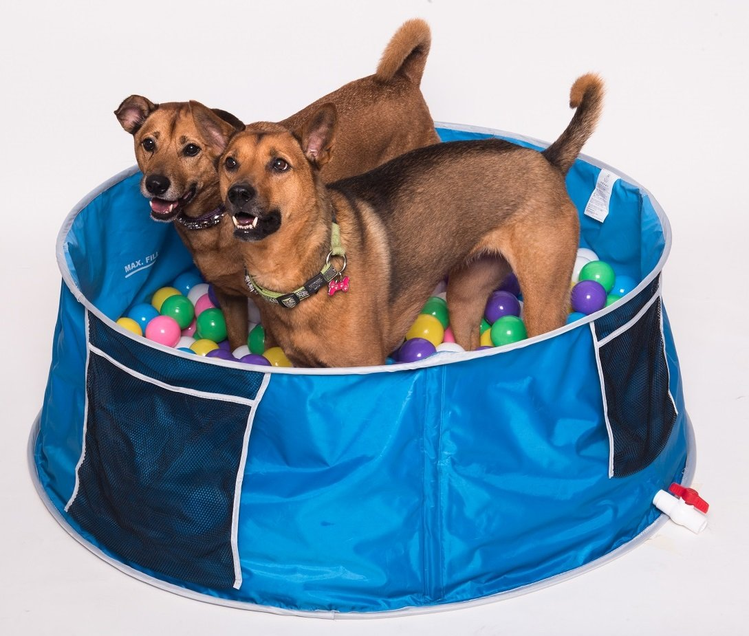 sconto online di vendita Coco Jojo pop up Pet bagno piscina piscina piscina XL  n ° 1 online