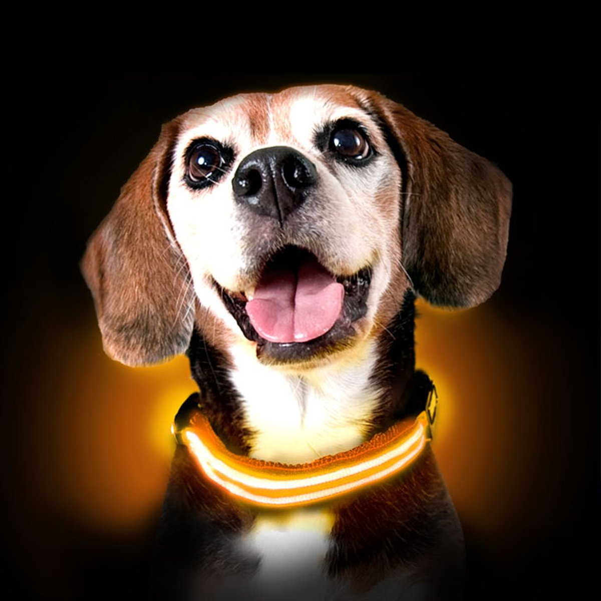 orange Medium 13-19in   33-48cm orange Medium 13-19in   33-48cm Ultimate LED Dog Collar USB Rechargeable, Cable Included, 5 Awesome colors. Ultra Bright, Durable, Made to Last. Make Your Dog More Visible at Night. (Medium, orange)