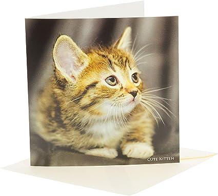 Lindo gatito Tarjeta de felicitación con sonido Juega NOISE Cuando opened. Gran Regalo Para Gato Amates: Amazon.es: Oficina y papelería