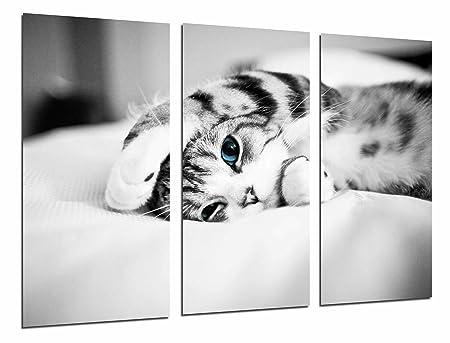 Poster Fotográfico Hipster Animal Gato Ojos Azules, Blanco y Negro ...