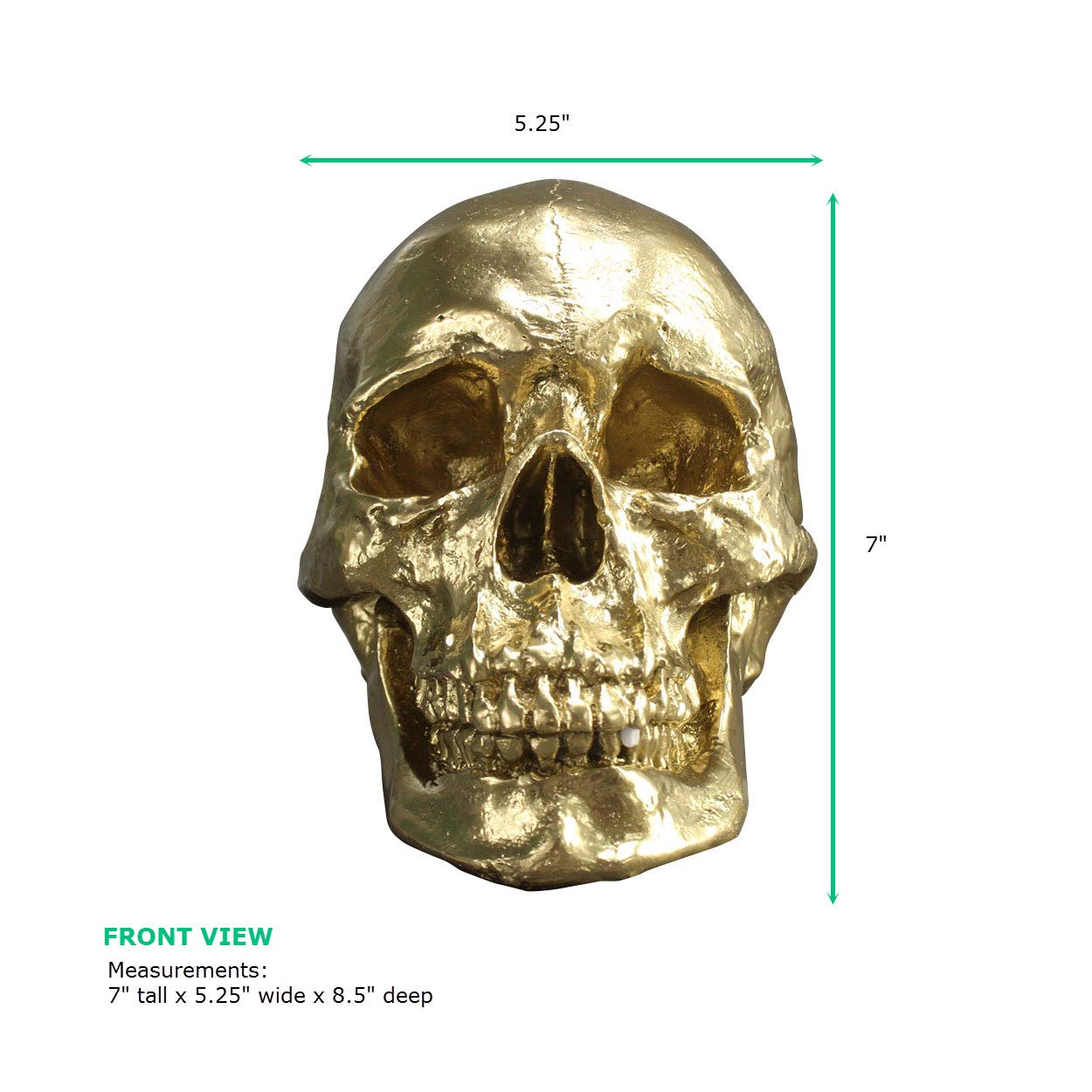 Wall Charmers Life Size Human Skull - 8.5'' Gold Faux Human Anatomy - Table Top Skeleton Head Home Decor by Wall Charmers (Image #5)