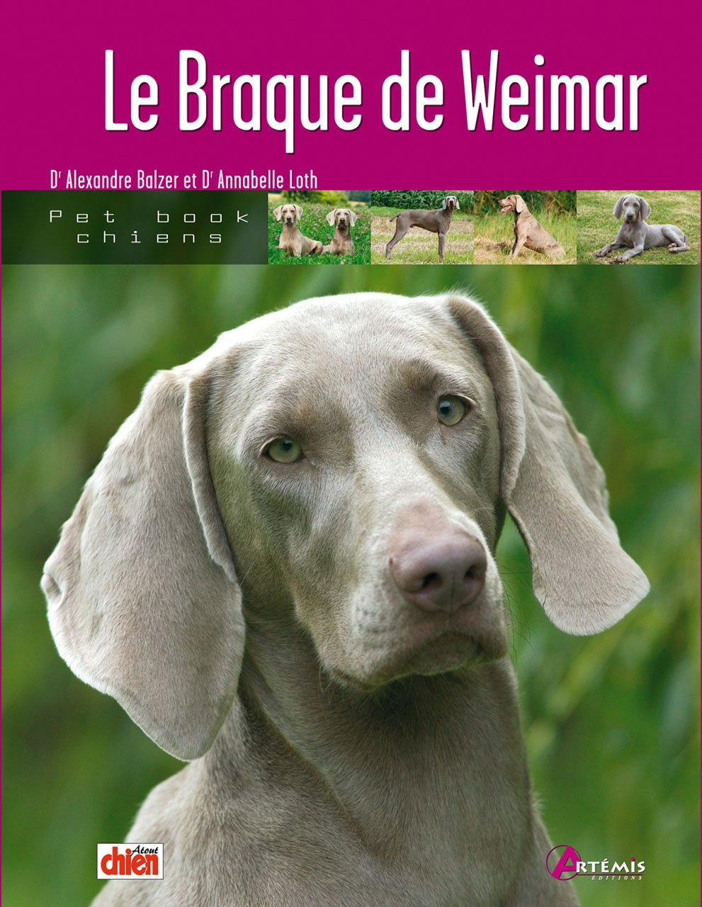 Braque De Weimar Pet Book Collectif Alexandre 9782844166081 Amazon Com Books