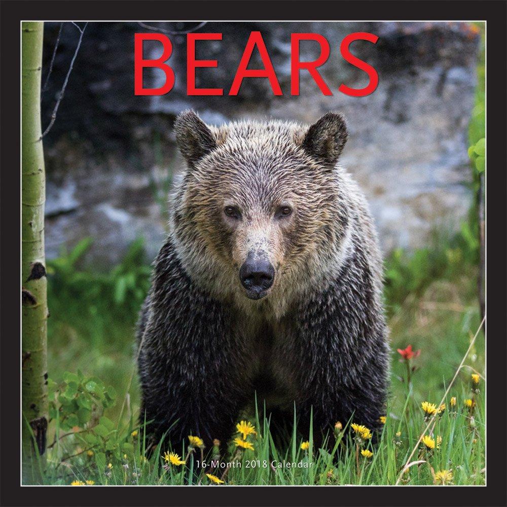 Bears - Bären 2018-16-Monatskalender: Original BrownTrout/Wyman Publishing-Kalender [Mehrsprachig] [Kalender] (Wall-Kalender)