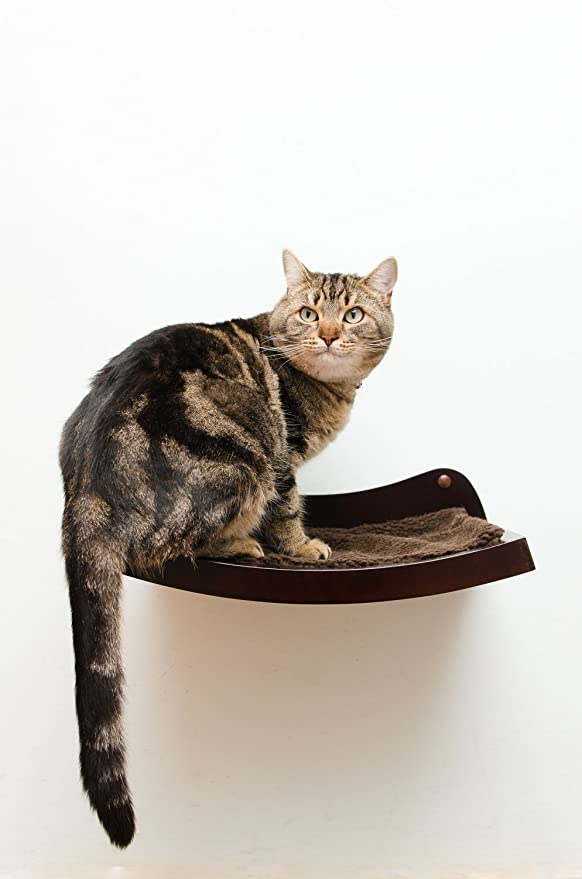 amazon com art of paws cat shelf cat perch cat bed with curved cat hammock design elegant wood wall mounted cat furniture a gift your cat will love