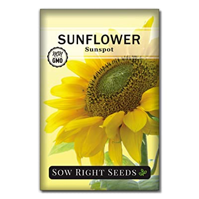 Sow Right Seeds - Sunspot Sunflower Seed for Planting- Full Packet with Instructions, Beautiful Non-GMO Heirloom Flower to Plant, Wonderful Gardening Gift (1 Packet) : Garden & Outdoor