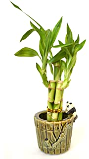 9greenbox lucky bamboo ceramic panda vase