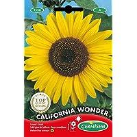 Germisem California Wonder Semillas de Girasol 4 g, EC1530