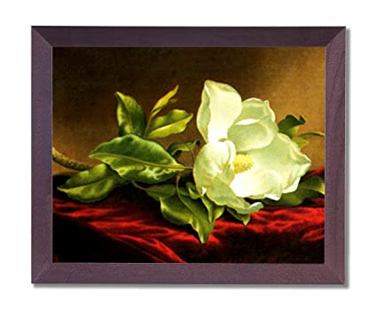 Amazon.com: White Magnolia Floral Flower Contemporary Picture Framed ...