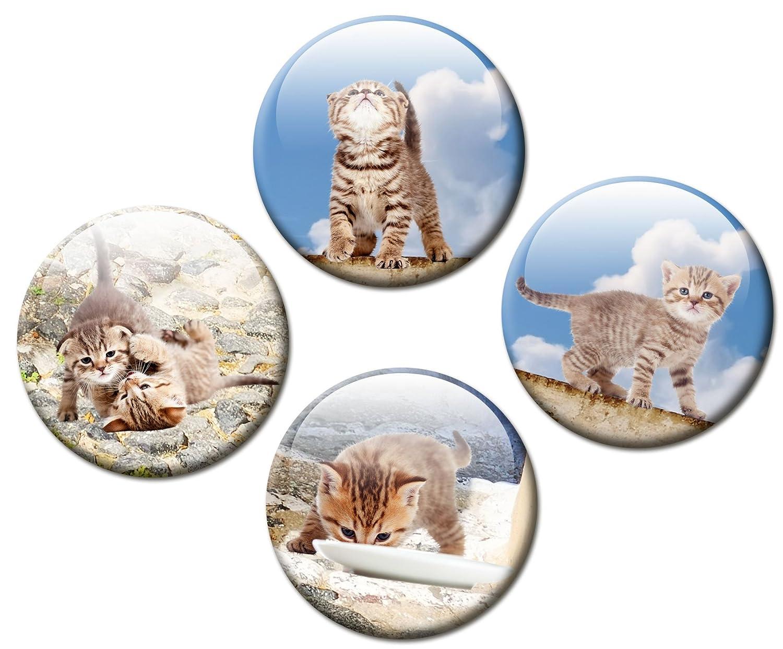 guma magneticum 2520 Frigorífico Imanes gato Juego de 4 Mediterran Diámetro 50 mm Imanes Niños Animales con diseño de gatos Siesta: Amazon.es: Hogar