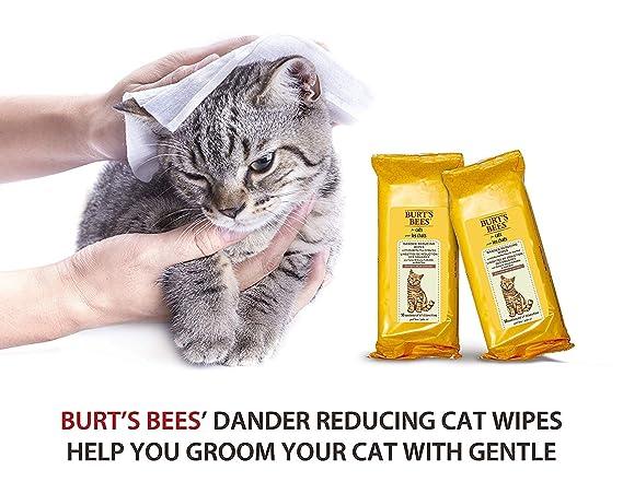 Amazon.com: Toallitas calmantes para gato Burts Bees ...
