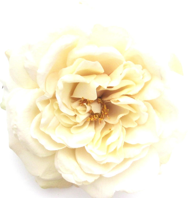 Amazon Com Full 5 5 Cream White Rose Silk Flower Hair Clip Clothing