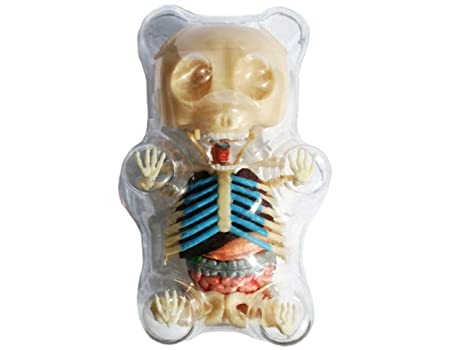 Amazon.com: 4D Master Gummi Bear Skeleton Anatomy Model Kit, Clear ...