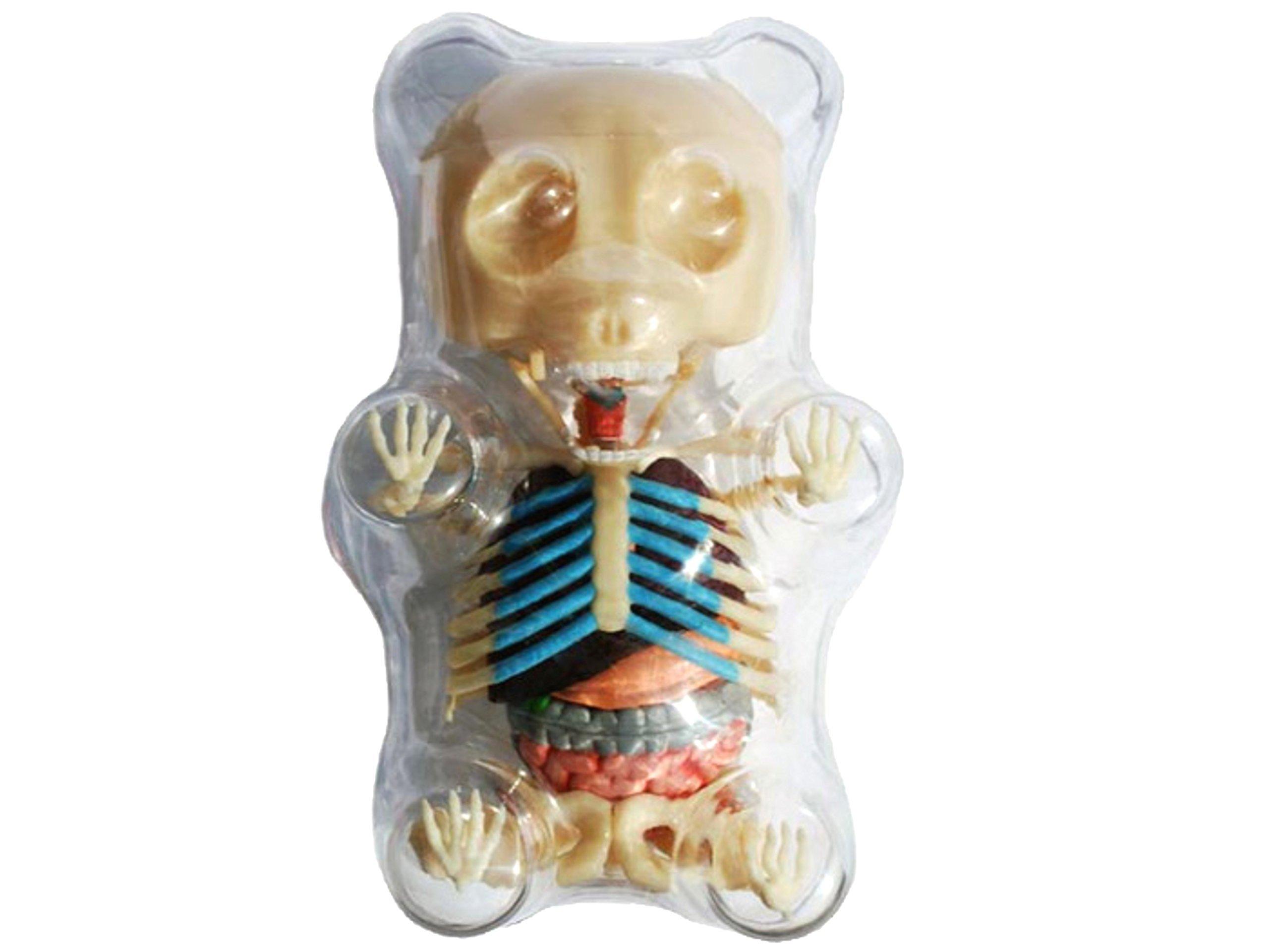 Amazon.com: 4D Master Gummi Bear Skeleton Anatomy Model Kit, Clear ...