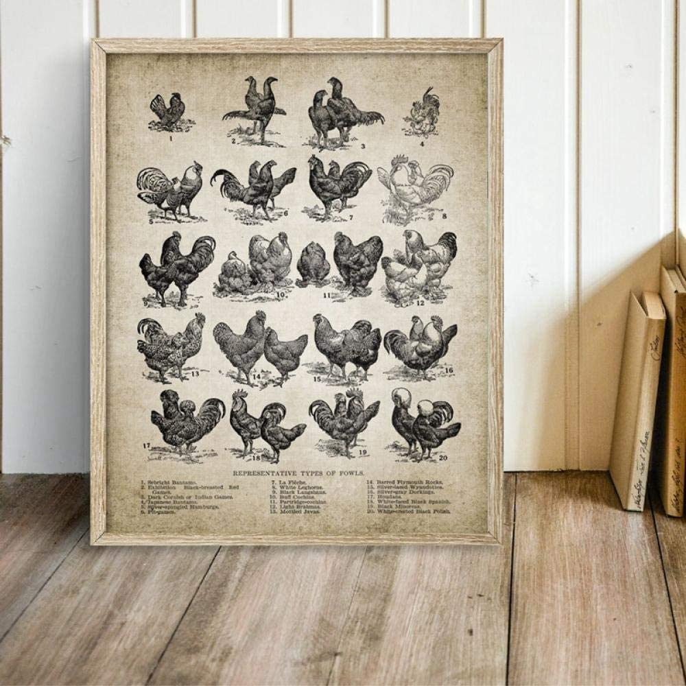Wall Art Canvas Posters Vintage Chicken Breeds Poster Prints Poultry Farming Vintage Hen Illustration Painting Picture Home Decor