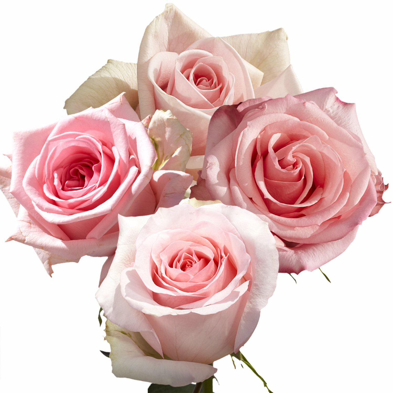 GlobalRose 100 Pink Roses- Exciting Fresh Flowers- Express Delivery by GlobalRose (Image #2)