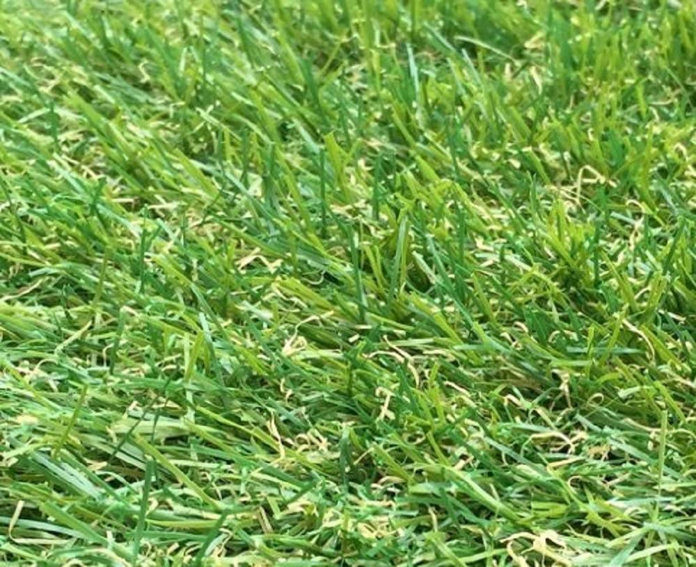 21 ft 4 Inch x 12 ft 10 Inch High Density Fake Turf 256 x 157 Inches 650cm x 400cm Natural /& Realistic Looking Astro Garden Lawn 4m x 6.5m Berlin 26mm Pile Height Artificial Grass