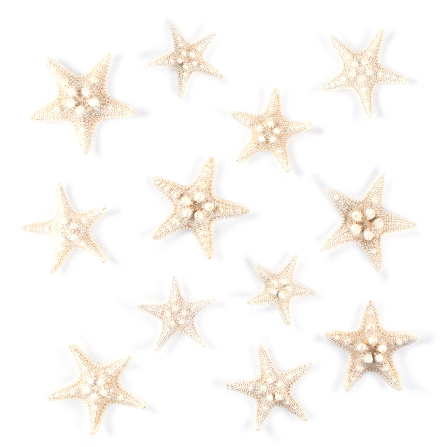 Starfish Natural Knobby Mini Beach Sea Stars for Wedding Seashell Crafts (Small, 12 Piece) by Super Z Outlet SZ330-S