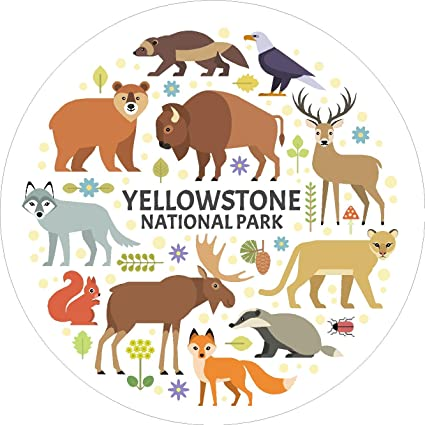 Amazon Com Oval Yellowstone National Park Animals 4x4