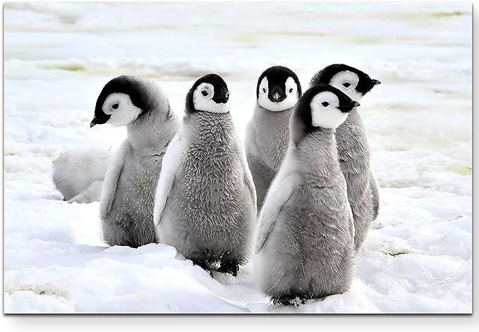 Pinguin Antarktis Herde Eis XXL Wandbild Foto Poster P0120