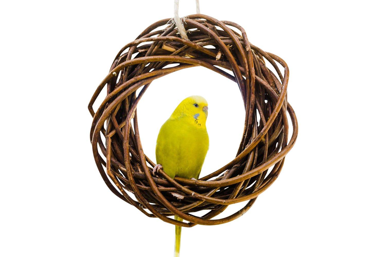 Leckerer Weidenring zum Knabbern für Wellensittich, Nymphensittich & Co.; Weidengeflecht. Ein ganz besonderes Vogelspielzeug für die Voliere oder den Vogelkäfig Wellensittich. Vogelspielplatz zum Aufhängen Vogelgaleria