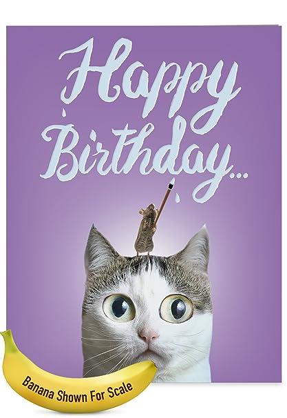 Amazon cat sent greetings birthday birthday appreciation card cat sent greetings birthday birthday appreciation card with envelope extra large 85quot m4hsunfo