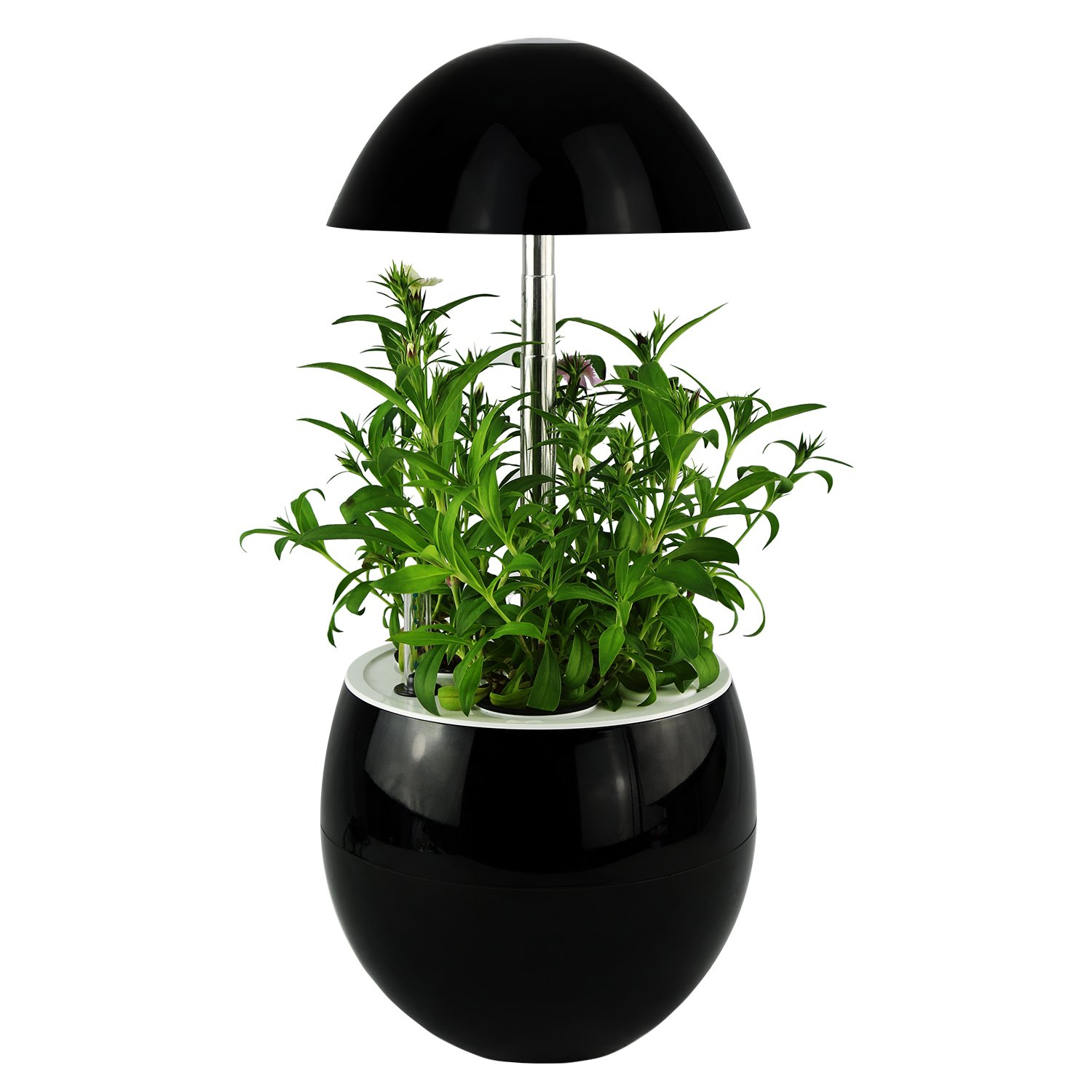 Decorative Indoor Garden Lamp Hydroponic Self Watering System, Complete Planter Pod Kit, Seeds & Led Light Grows Herbs, Flowers, Succulents in Kitchen or Any Room by Domestic Diva LA (Black) by Domestic Diva LA