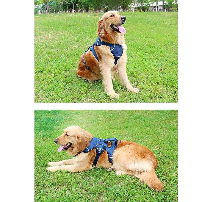 Azyq Arnés para perros al aire libre para perros medianos y ...