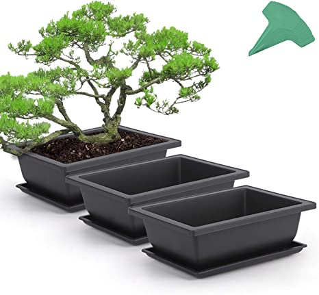 Amazon Com Growneer 3 Packs 9 Inches Bonsai Training Pots With 15 Pcs Plant Labels Plastic Bonsai Plants Growing Pot For Garden Yard Office Living Room Balcony And More Kitchen Dining