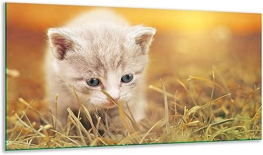 Placa Protectora para vitrocerámica, diseño de Gato, Multicolor, 1 Pieza, 90 x 52 cm, Placas de cocción de Cristal, inducción,: Amazon.es: Hogar