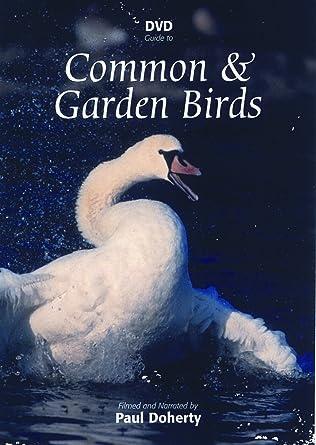 Dvd Guide To Common Garden Birds Amazon Co Uk Paul Docherty Dvd