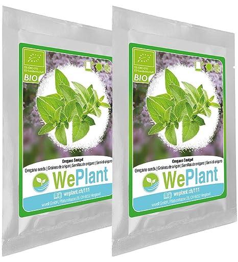 Bio Origan Graines De Plantes Aromatiques Interieur Exterieur