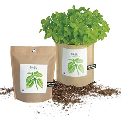 Amazon.com : Potting Shed Creations Garden in a Bag - Basil : Basil ...