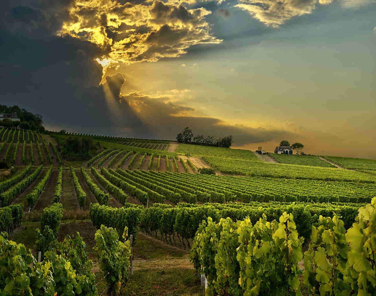 Ghjxda 5D DIY Diamond Painting Kits Country Painting Arts Craft Sunset Over Vineyards South France Painting by Numbers for Adults Canvas Full Drill 16x20 Inch