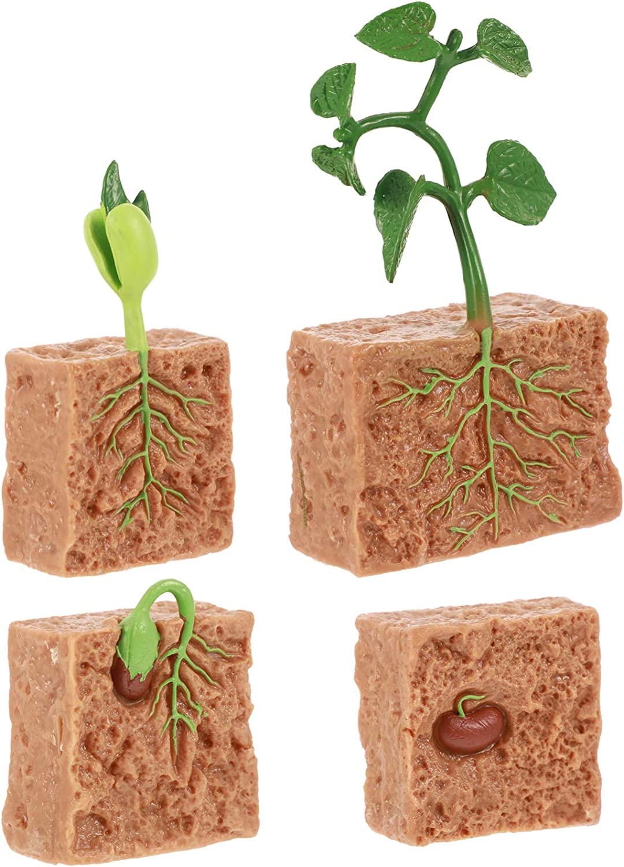 DOITOOL 4pcs Life Cycle of a Green Bean Plant Bundled