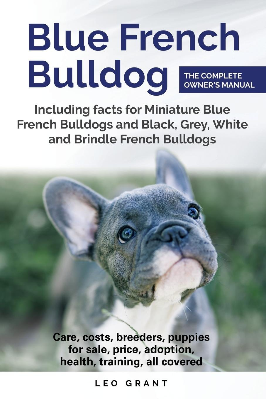 Blue French Bulldog Care Costs Price Adoption Health Training