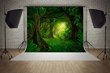 2 1 M X 1 5 M Dschungel Hintergründe Sonnenschein Kamera