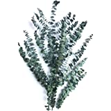 Justmeetyou Eucalyptus Branches - Green, Dried Flowers Wholesale Express Delivery