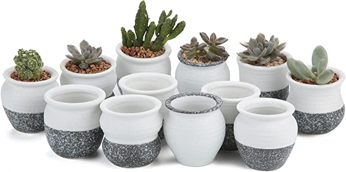 T4U 2.5 Inch Small Ceramic Succulent Planter Pots with Drainage Hole Set of 12, Snowflakes Glazed Porcelain Handicraft as Gift for Mom Sister Home Office Table Desk Decoration
